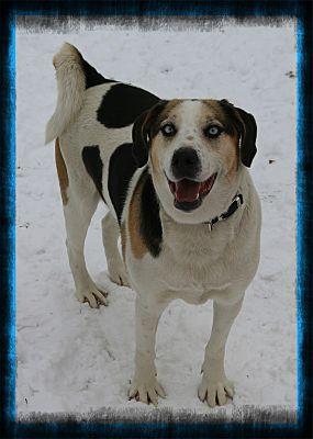 Bernie at Tri County Animal Rescue
